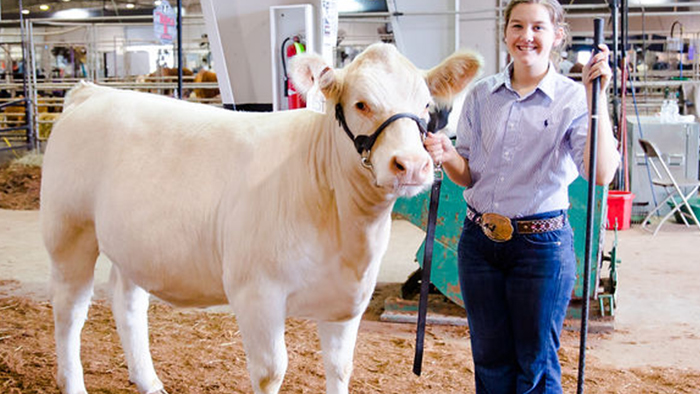 Livestock Scholarship